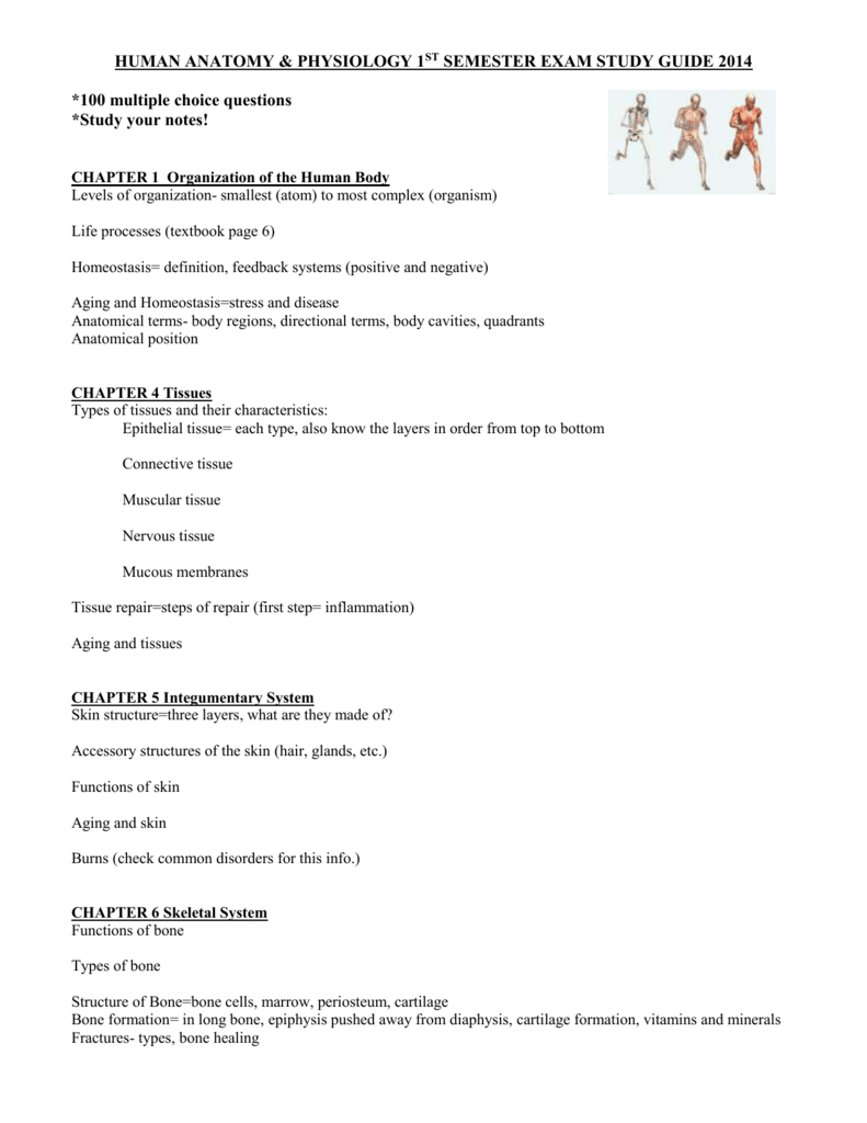 Contemporáneo Anatomy And Physiology Chapter 4 Study Guide Answers ...