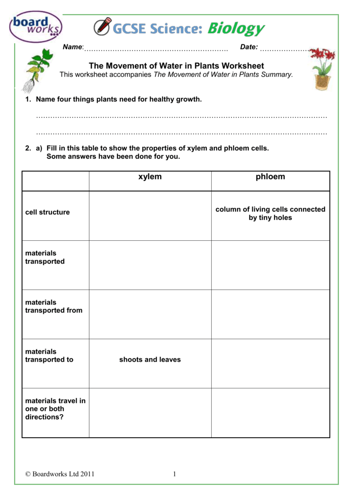 The Movement of Water in Plants Worksheet – Xylem and Phloem Worksheet