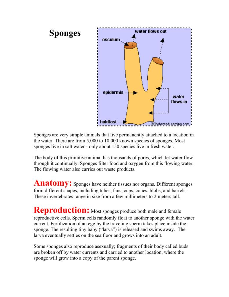 Sponges - InforMNs