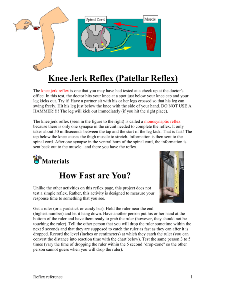 Knee Jerk Reflex (Patellar Reflex)