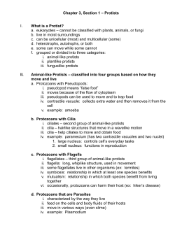 Chapter 3, Section 1 – Protists