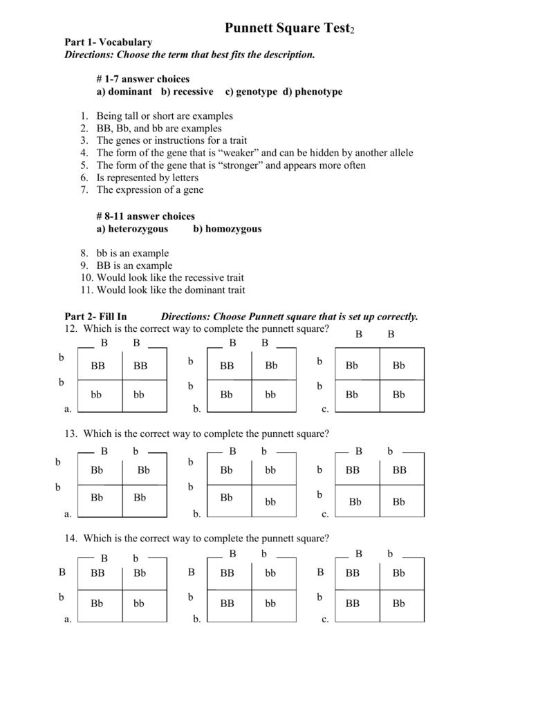 Punnett Square Test