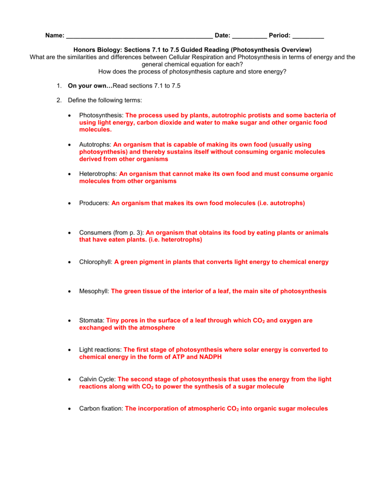 Answers – Photosynthesis Review Worksheet Answers