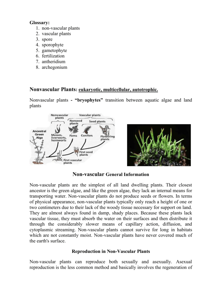 Uncategorized Vascular And Nonvascular Plants Worksheet nonvascular plants transition between aquatic algae