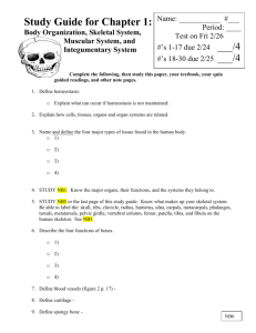 Study Guide for Body Organization and Skeletal System Quiz