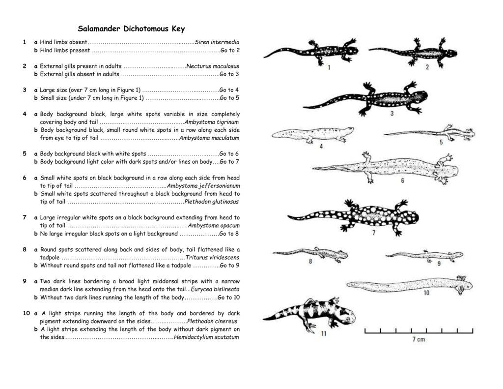 Dichotomous Key Worksheets Delibertad – Dichotomous Key Worksheet
