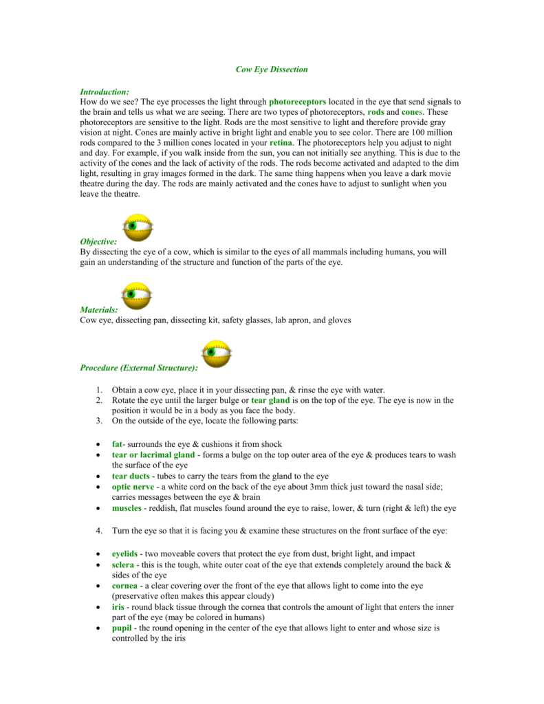 Worksheets Cow Eye Dissection Worksheet 009005511 1 c700085b366ad201437b5ffc0e723b65 png