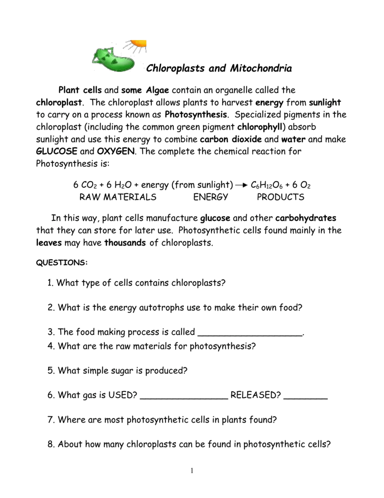 Chloroplasts And Mitochondria Autosaved
