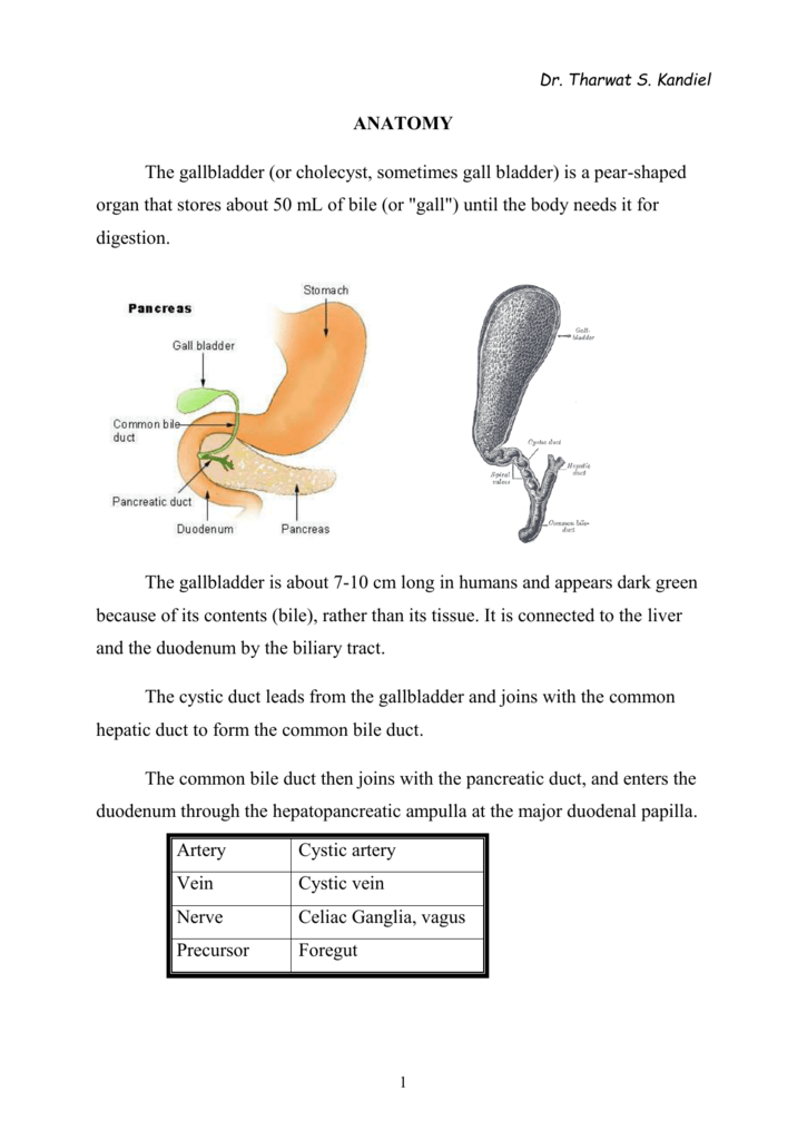 GB Anatomy - Tharwat kandil