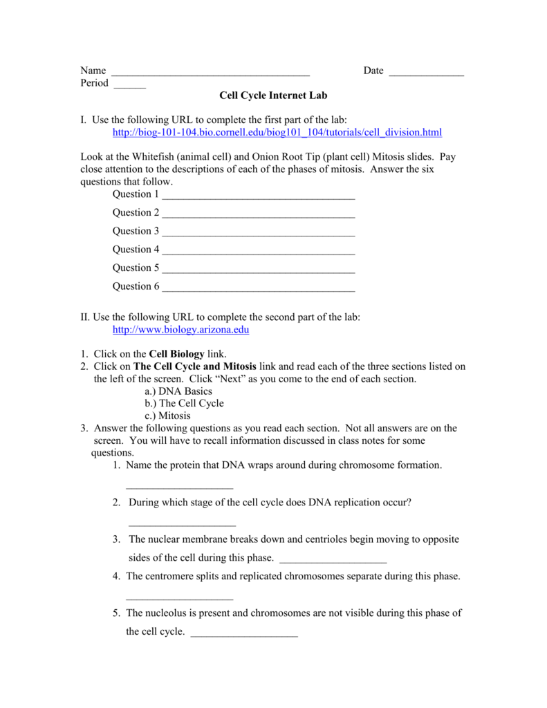 Cell Cycle And Mitosis Worksheet Answers Moniezja – Mitosis Worksheet Key