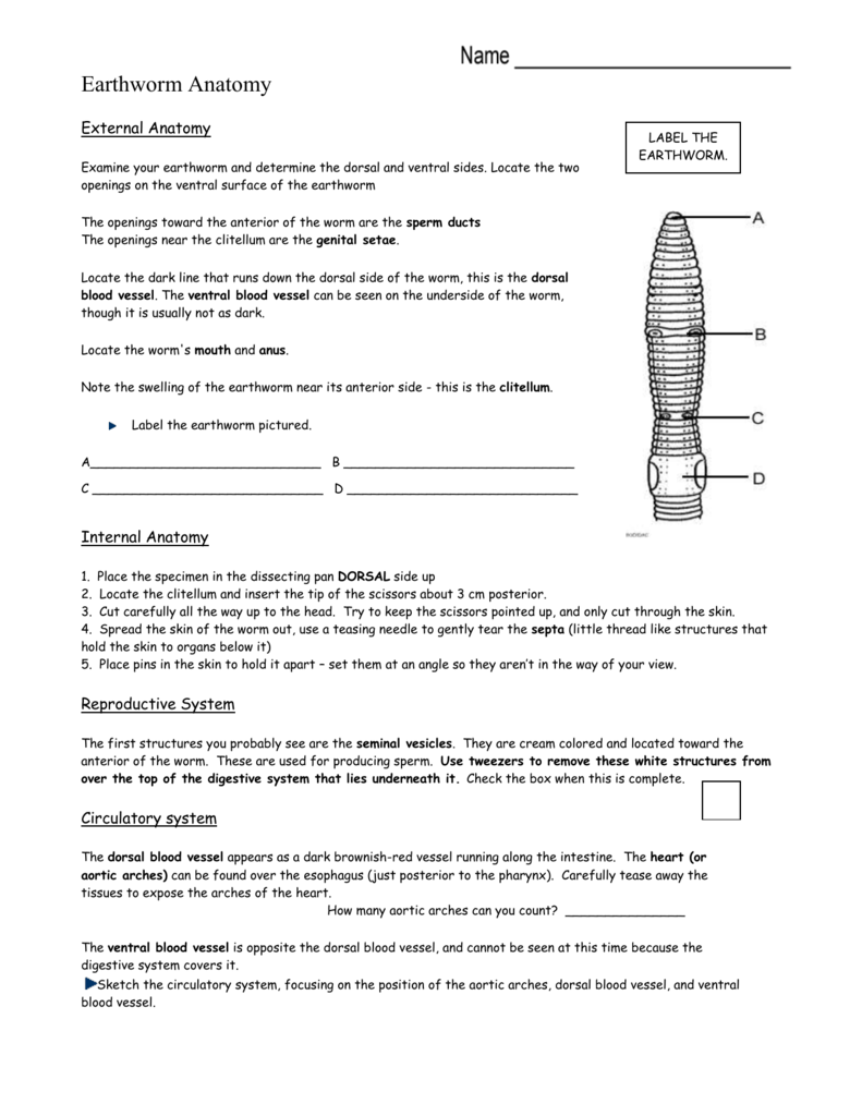 Anatomical Directions Worksheet Desirbrilliancecream 28