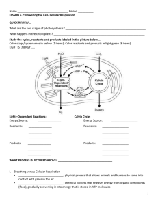 Cellular Respiration Packet
