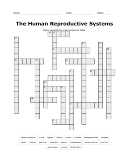 Classworkhomework male reproductive system reproductive system crossword puzzle ccuart Images