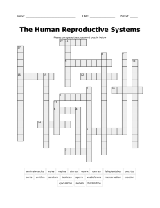Reproductive System Crossword Puzzle