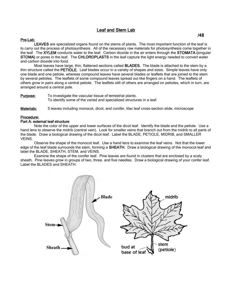 Leaf and Stem Lab