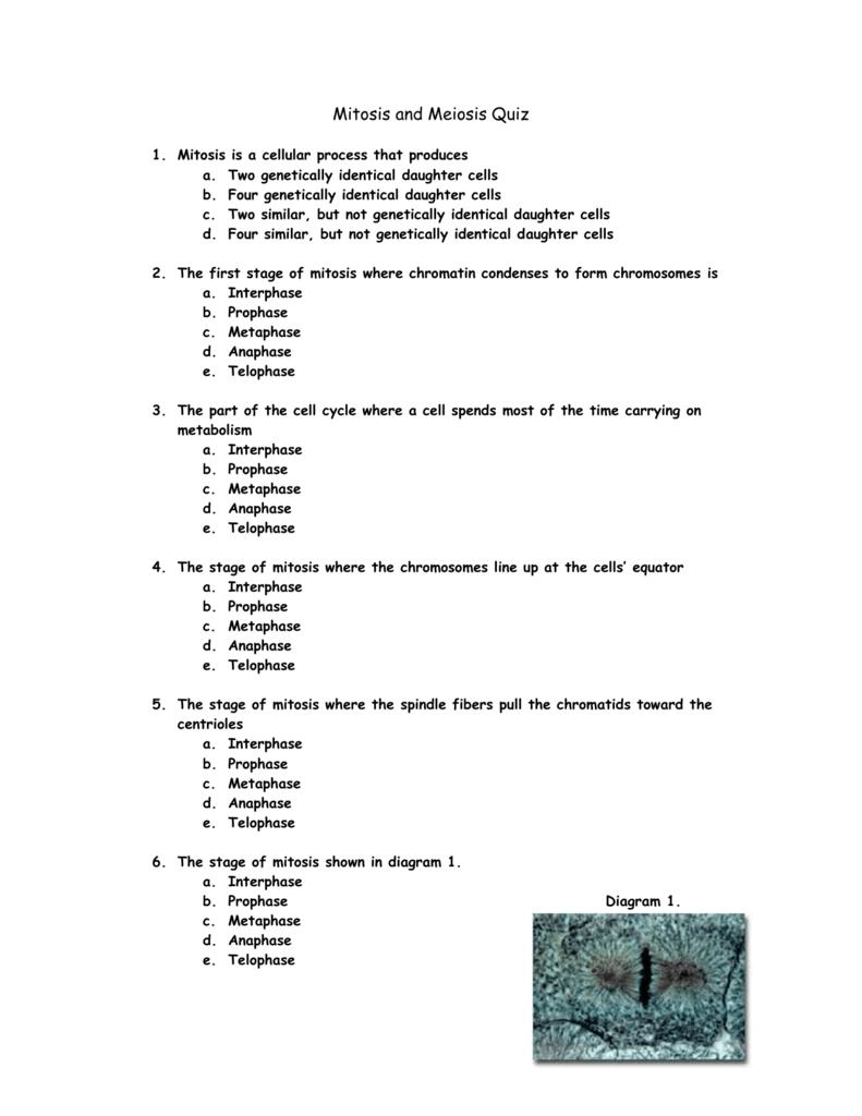 Mitosis and meiosis quiz 0090374221 2717e92d2ca068dc595799e754996779g ccuart Choice Image