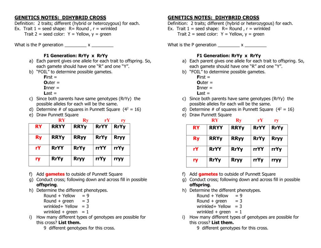 Uncategorized Dihybrid Punnett Square Worksheet genetics notes dihybrid cross