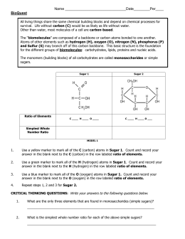 Carbohydrate Worksheet Answer Key