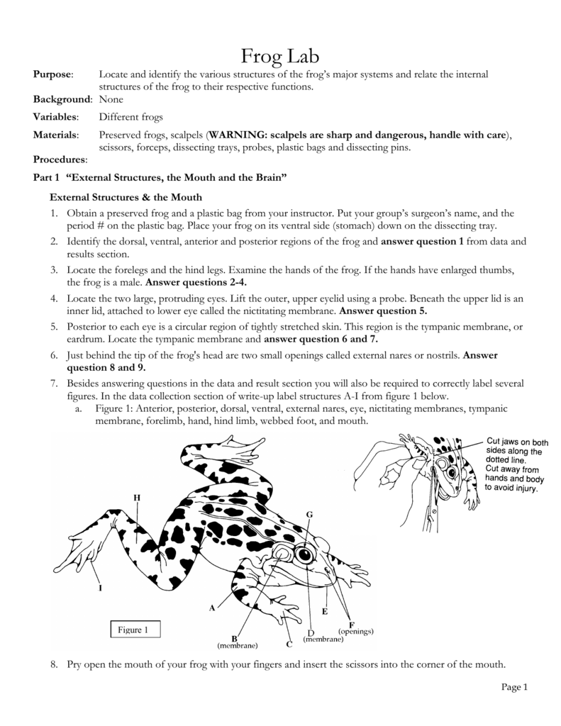 worksheet Frog Dissection Worksheet Answer Key frog dissection