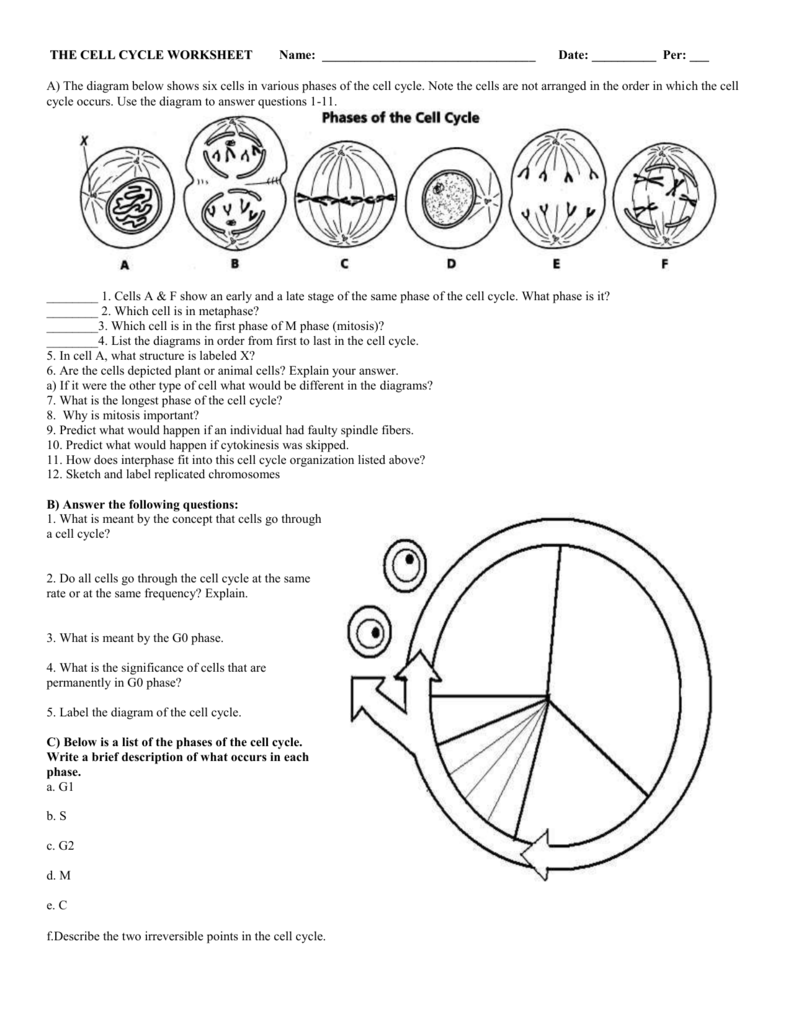 6  The Cell Cycle Worksheet