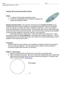 Activity: Discovering Protists