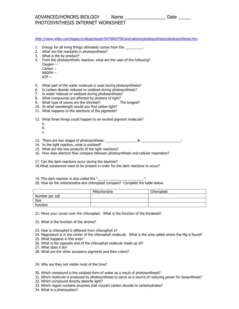 Photosynthesis Internet Worksheet Practice