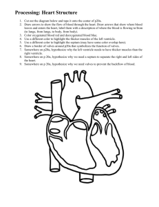 Processing: Heart Structure Cut out the diagram below and tape it