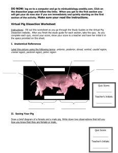 Virtual Pig Dissection Worksheet