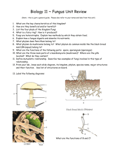 Biology 11 ~ Fungus Unit Review