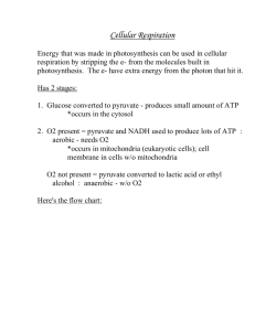 Answers To The Respiration Study Guide