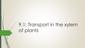 9.1: Transport in the xylem of plants