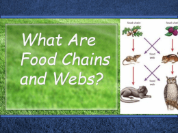 What Are Food WebsIntro - seelytech