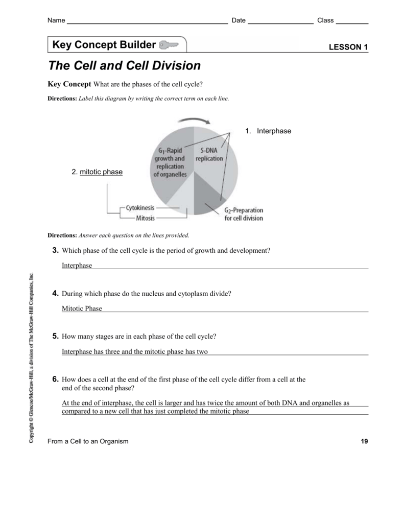 Cell Concept Map Worksheet Answer Key.Cell Cycle Key Concept Builder With Answers