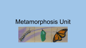 Metamorphosis Unit - Overview of Art Education: Abigail Creech