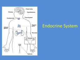 endocrine system review packet. Black Bedroom Furniture Sets. Home Design Ideas