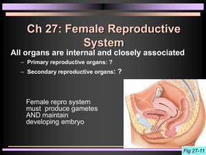 Ch 27: Female Reproductive System