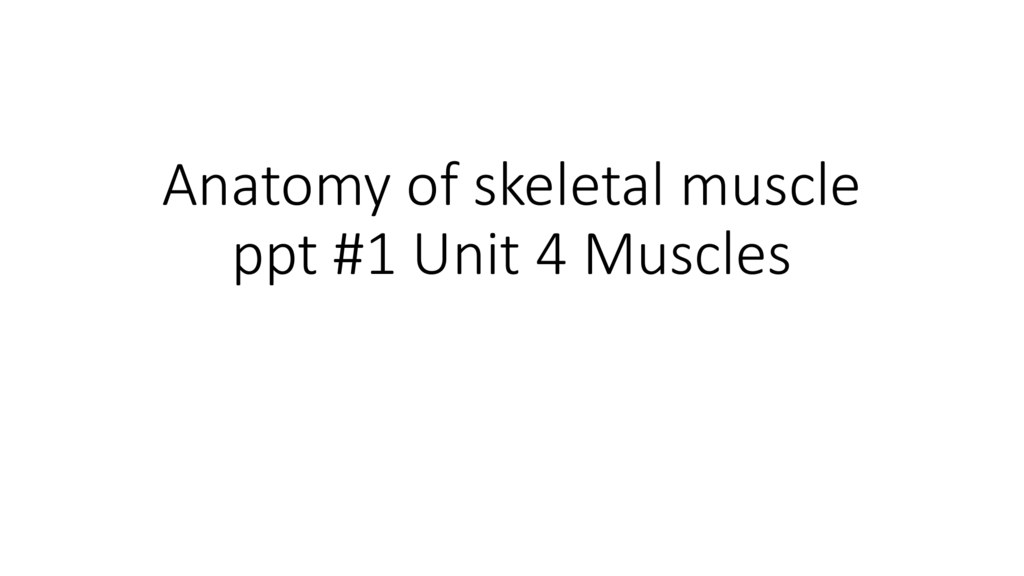 Anatomy Of Muscles Ppt 1 Liberty Union High School District