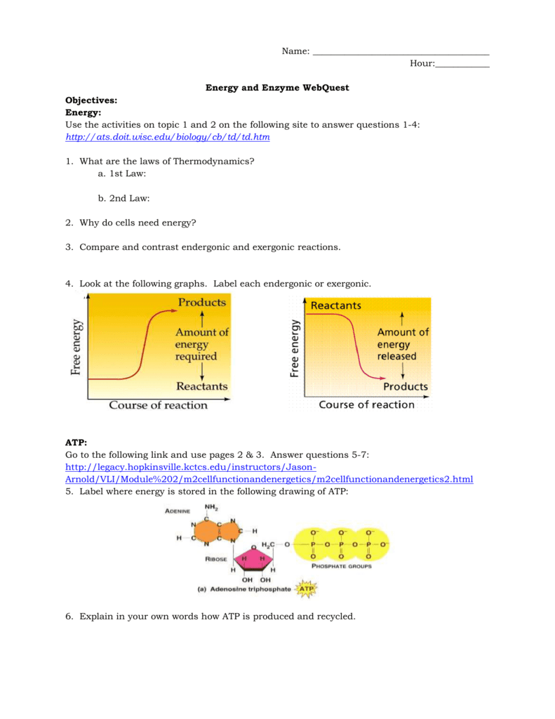 Energy Enzyme Webquest