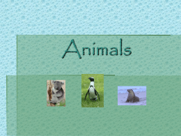 Animals - msdwebsites