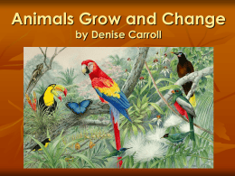 Animals Grow and Change (Powerpoint