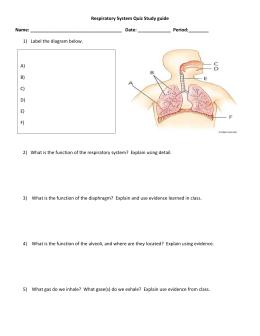 respiratory system ws rh studylib net Respiratory System Labeling Diagram Answer Key Respiratory System Worksheet