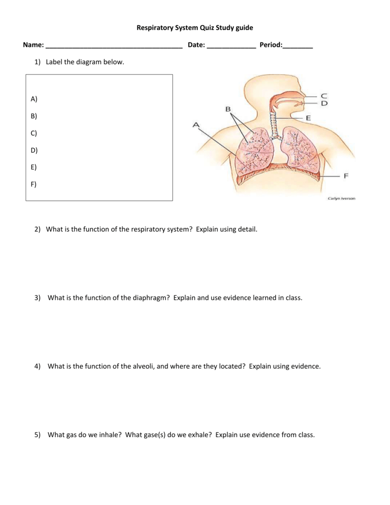 Beste Anatomy And Physiology Respiratory System Study Guide ...