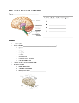 Brain Structure and Function Guided Notes Name: The brain is