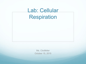 Lab: Cellular Respiration