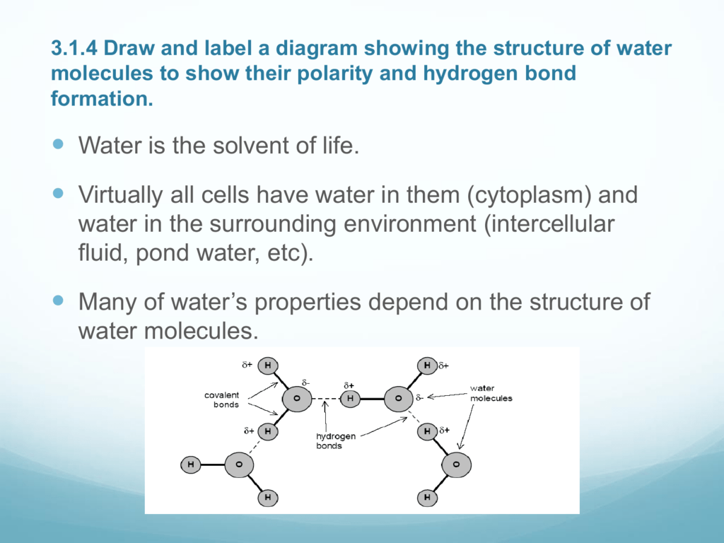 31 Draw And Label A Water Molecule