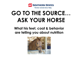 GO TO THE SOURCE… ASK YOUR HORSE