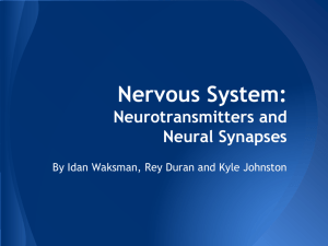 Nervous System: Neurotransmitters and Neural