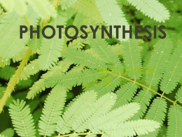 photosynthesis - Helena High School