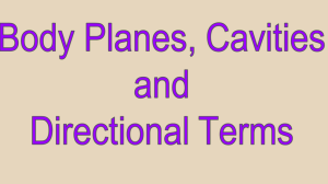 Body Planes, Directional Terms and Body Cavities Power Point
