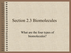 Biomolecule Power Point For Class Notes
